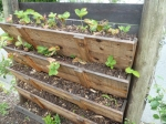 Strawberry planter in community garden
