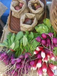 Veggies for sale at Van Tech market garden