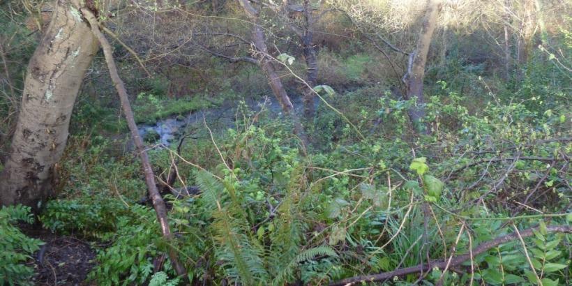 Still Creek runs through Renfrew Ravine.