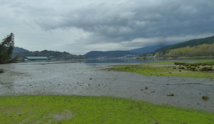 The tidal mud flat in Shoreline Park is at the head of Burrard Inlet.