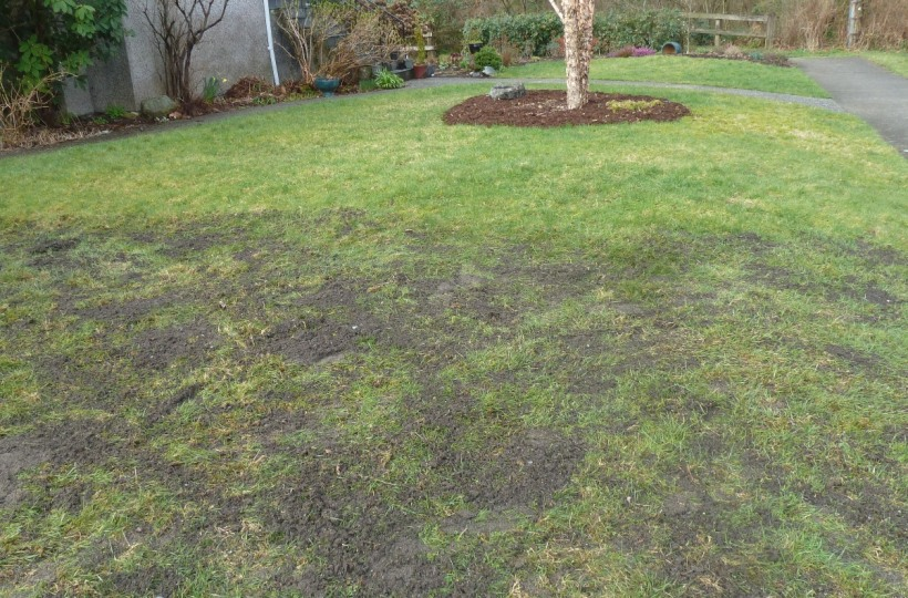 Topdress-lawn